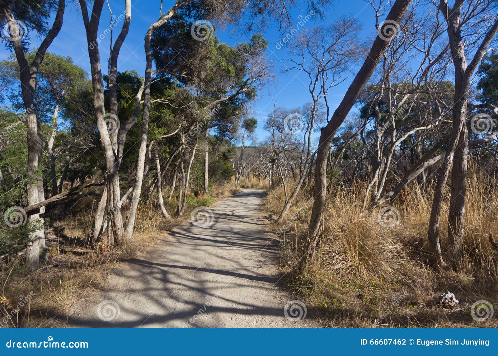 Krajobrazowy widok ścieżka w odludzie krzaku Australia
