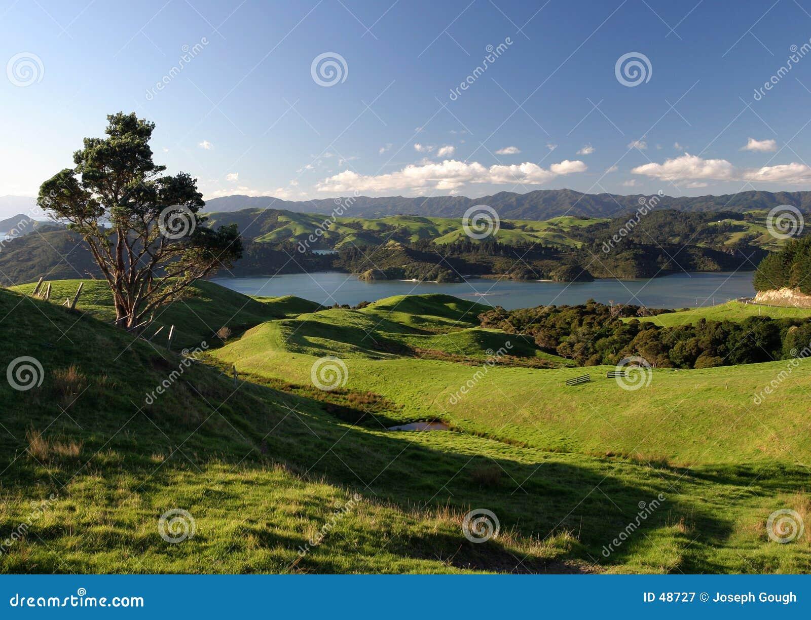 Krajobrazu wiejskiego nowe Zelandii