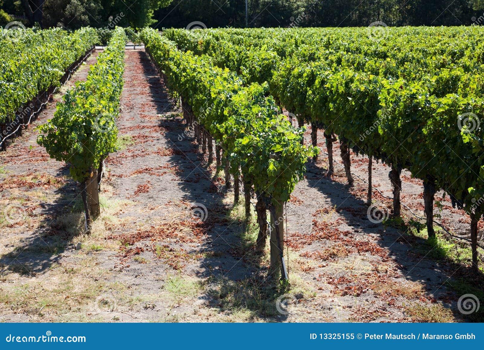 Kraju wino