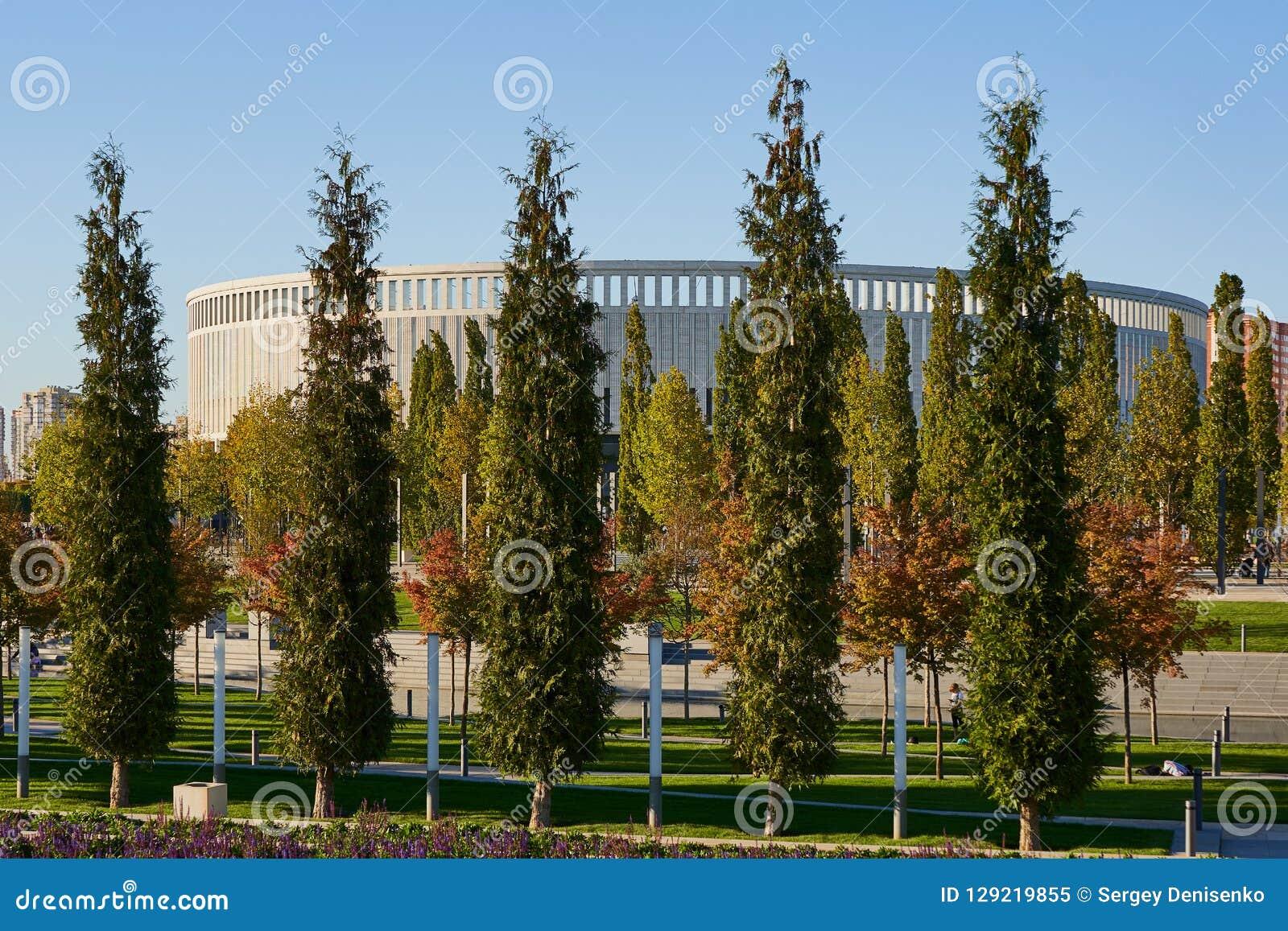 Krasnodar, Rússia - 7 de outubro de 2018: Fileiras delgadas de sempre-verde e de árvores de folhas mortas no passeio no parque de