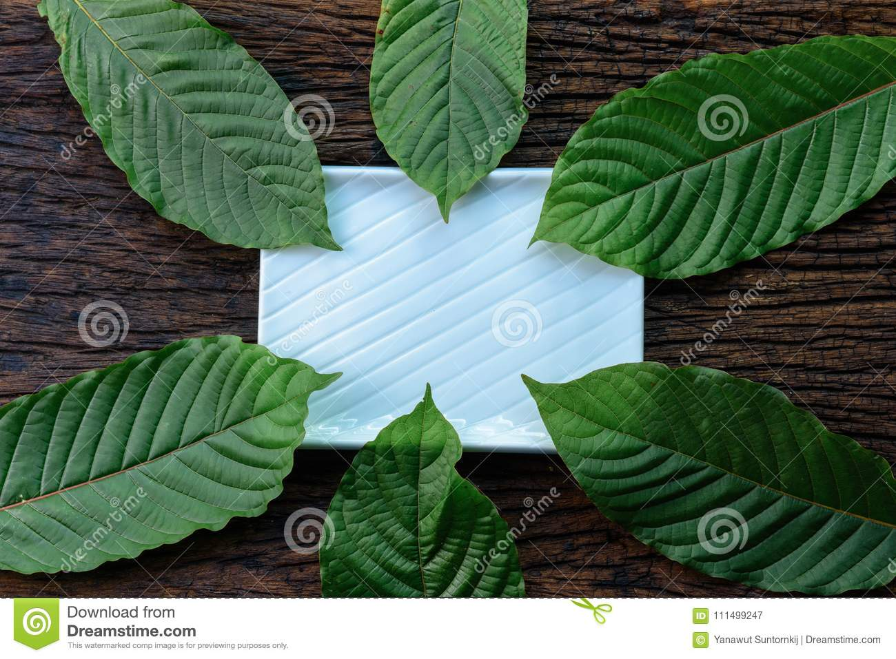 Kratom Mitragyna speciosa Mitragynine leaves frame pattern on white ceramic plate and wooden background