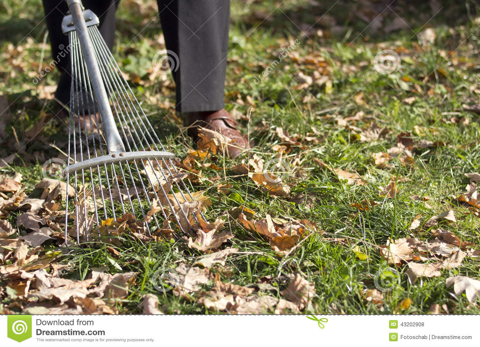 Download Kratta för leaves arkivfoto. Bild av kratta, gräs, trädgårdsmästarar - 43202908