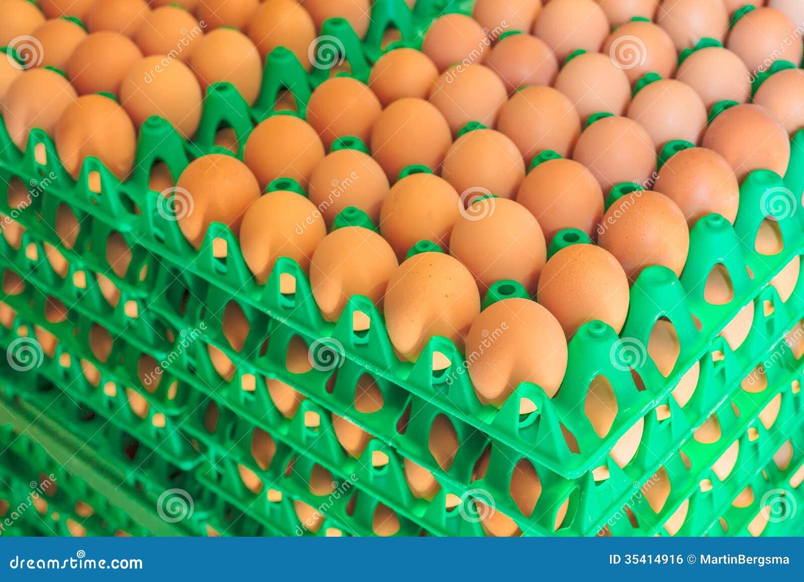 Kratten met verse eieren op een organisch kippenlandbouwbedrijf