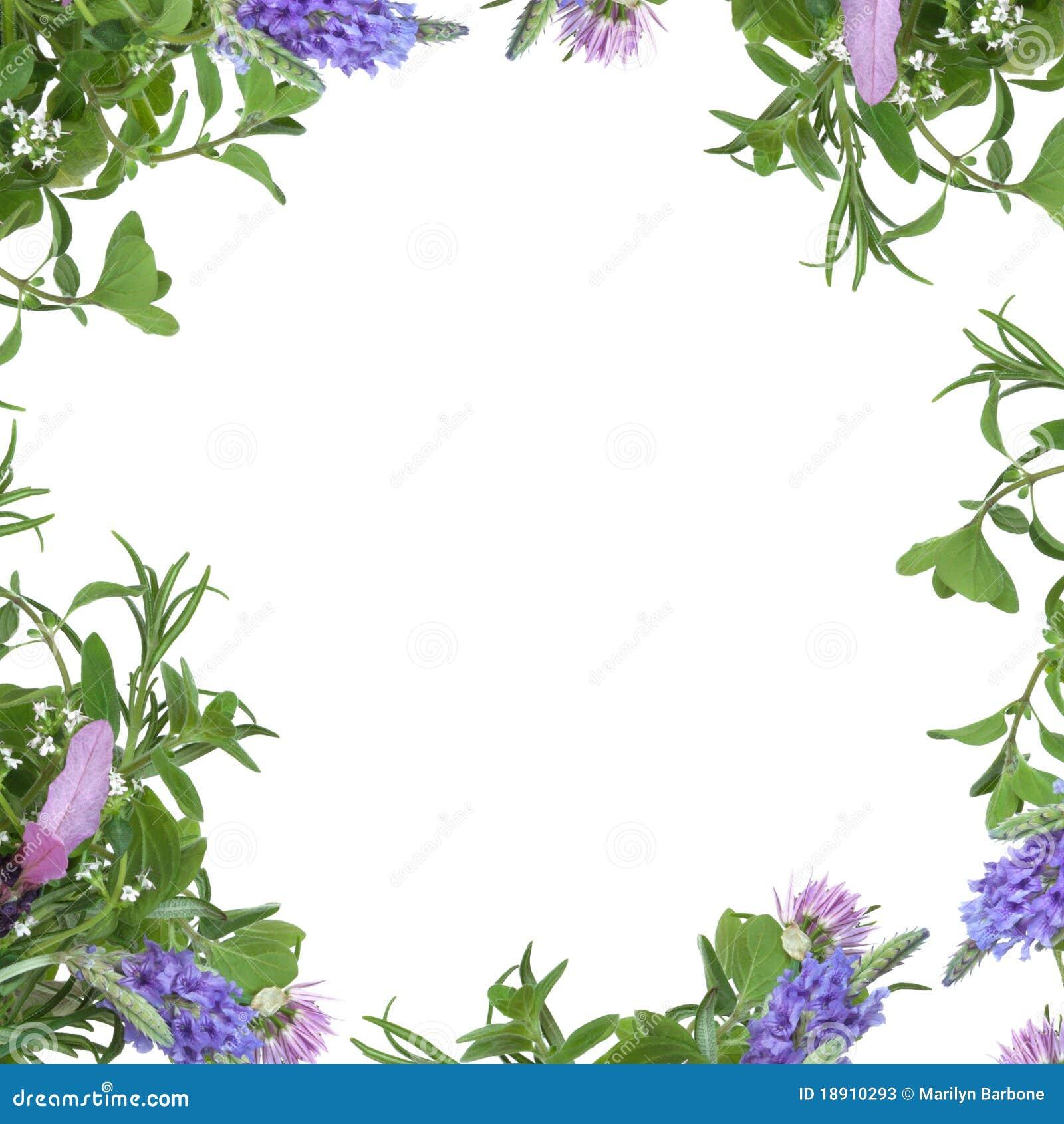 Kraut-Blumen-Rand