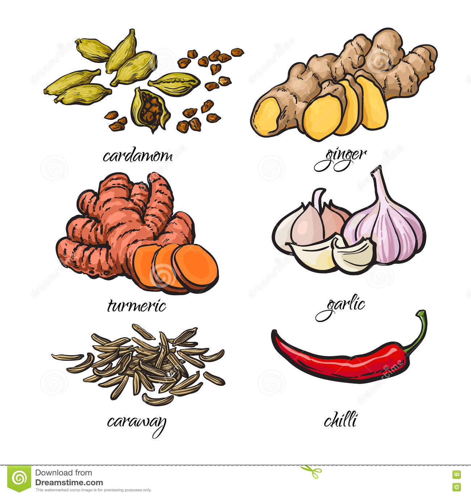 Kreśli stylowe pikantność - czosnek, imbir, turmeric, kardamon, chili, karolek