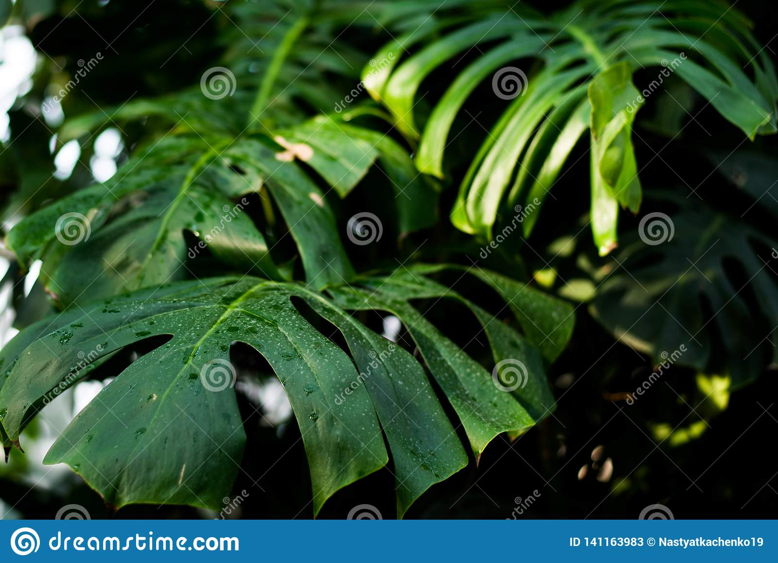 Kreatywnie tropikalna zieleń opuszcza układ Natury wiosny pojęcie Mieszkanie nieatutowy Tło