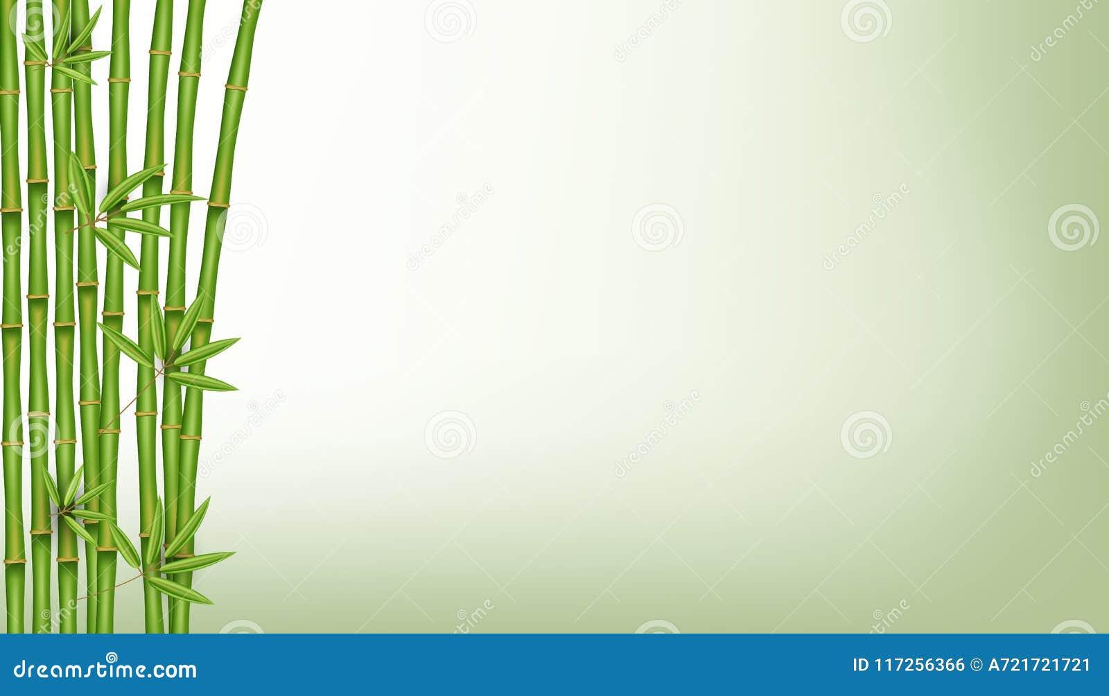 Kreatywnie wektorowa ilustracja chiński bambusowy trawy drzewo Tropikalny azjatykci rośliny sztuki projekt Abstrakcjonistyczna po