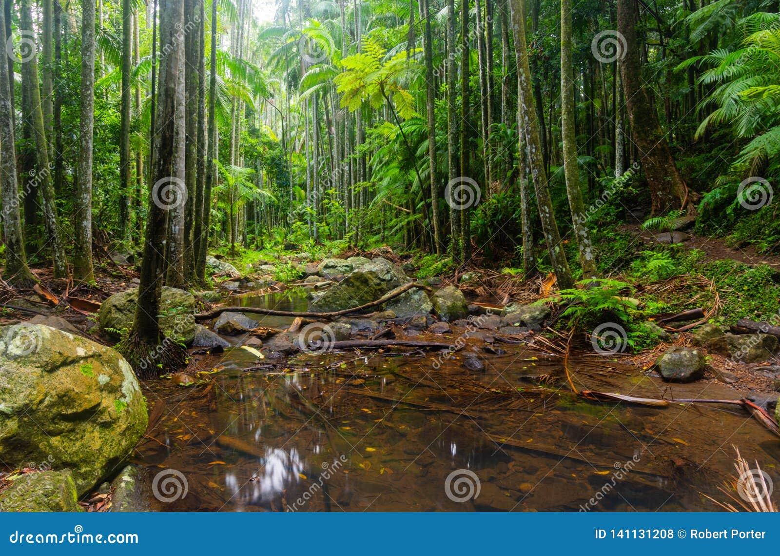 Kreek in een Subtropisch Regenwoud - Australië