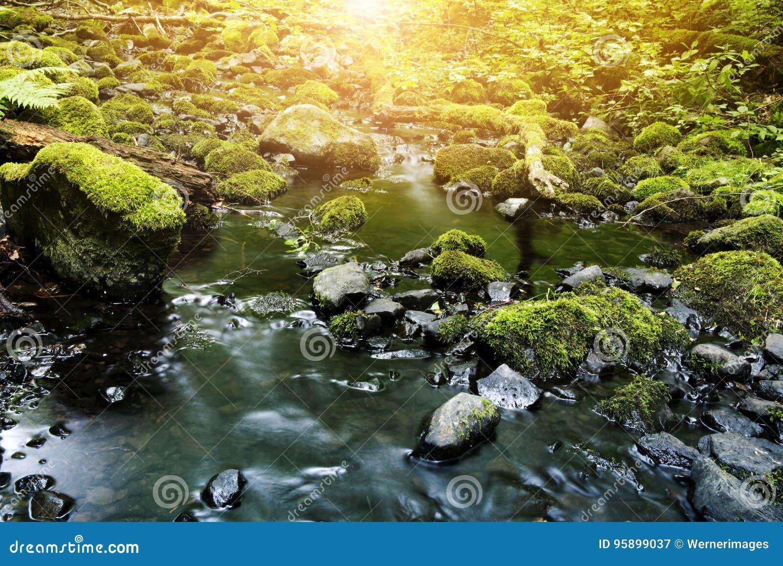 Kreek met stenen met vers groen mos worden behandeld dat