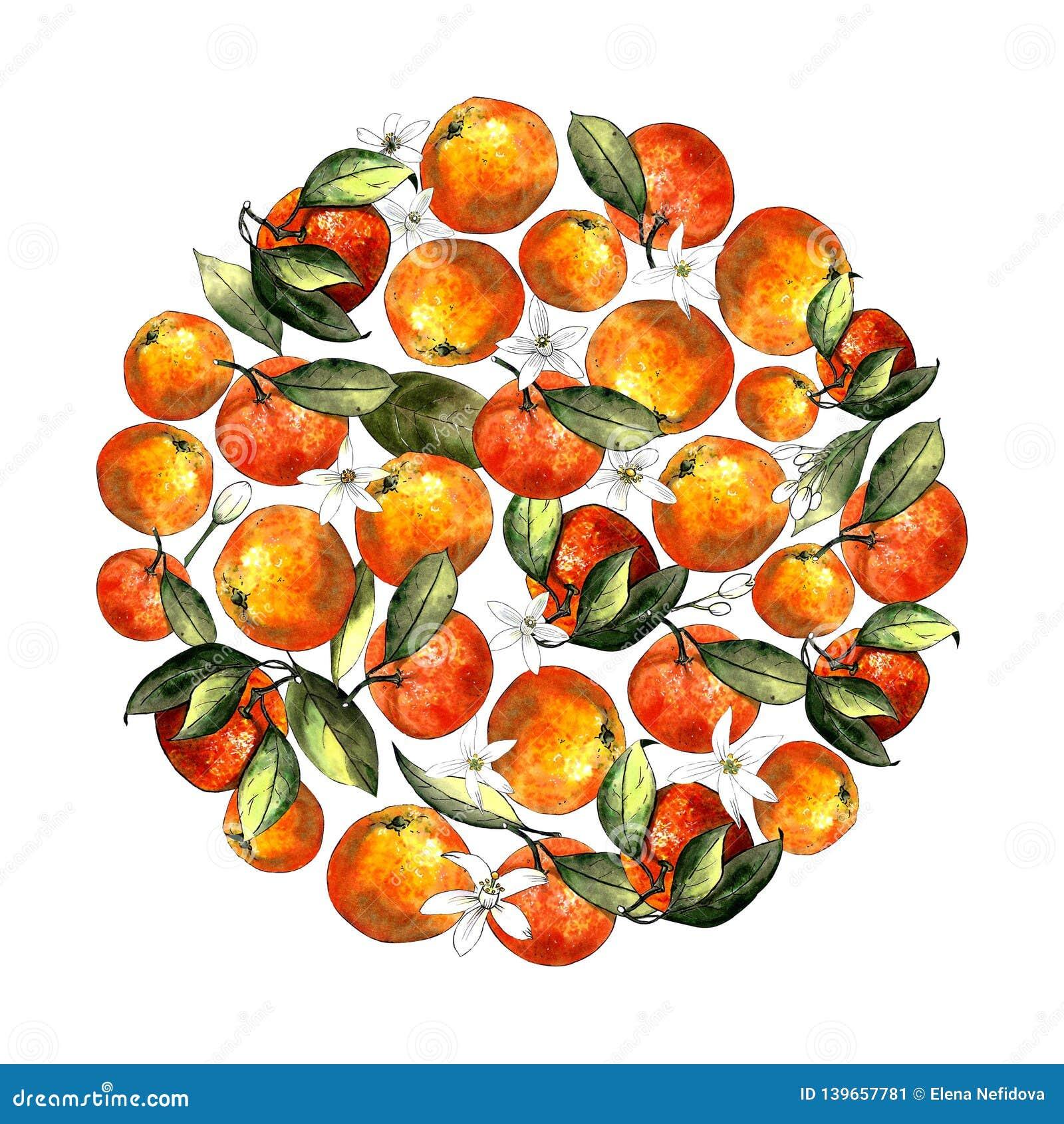 Kreis von Tangerinen, von Blättern und von Blumen auf einem weißen Hintergrund Zeichnungsmarkierungen