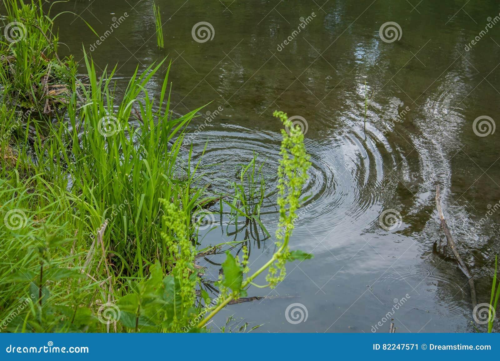 Kreise auf dem Wasser
