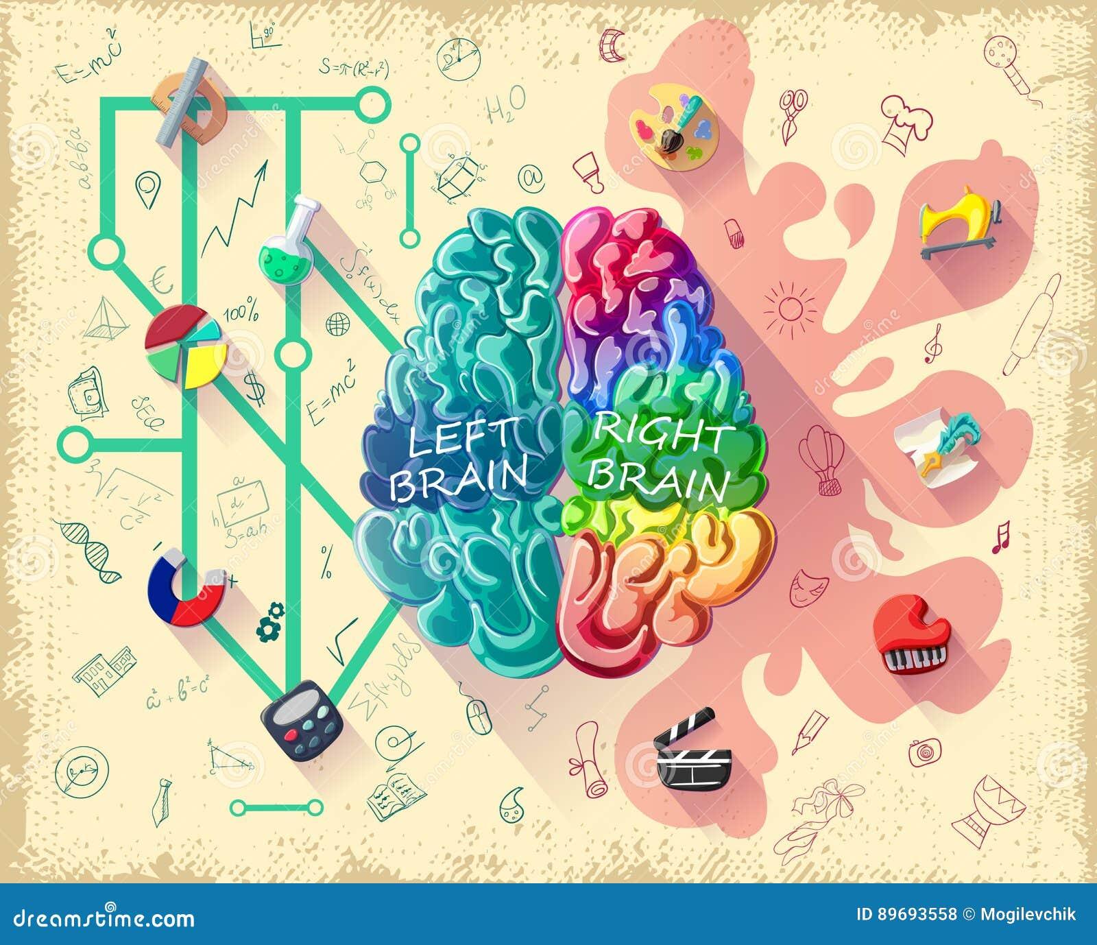 Kreskówka ludzkiego mózg diagrama pojęcie