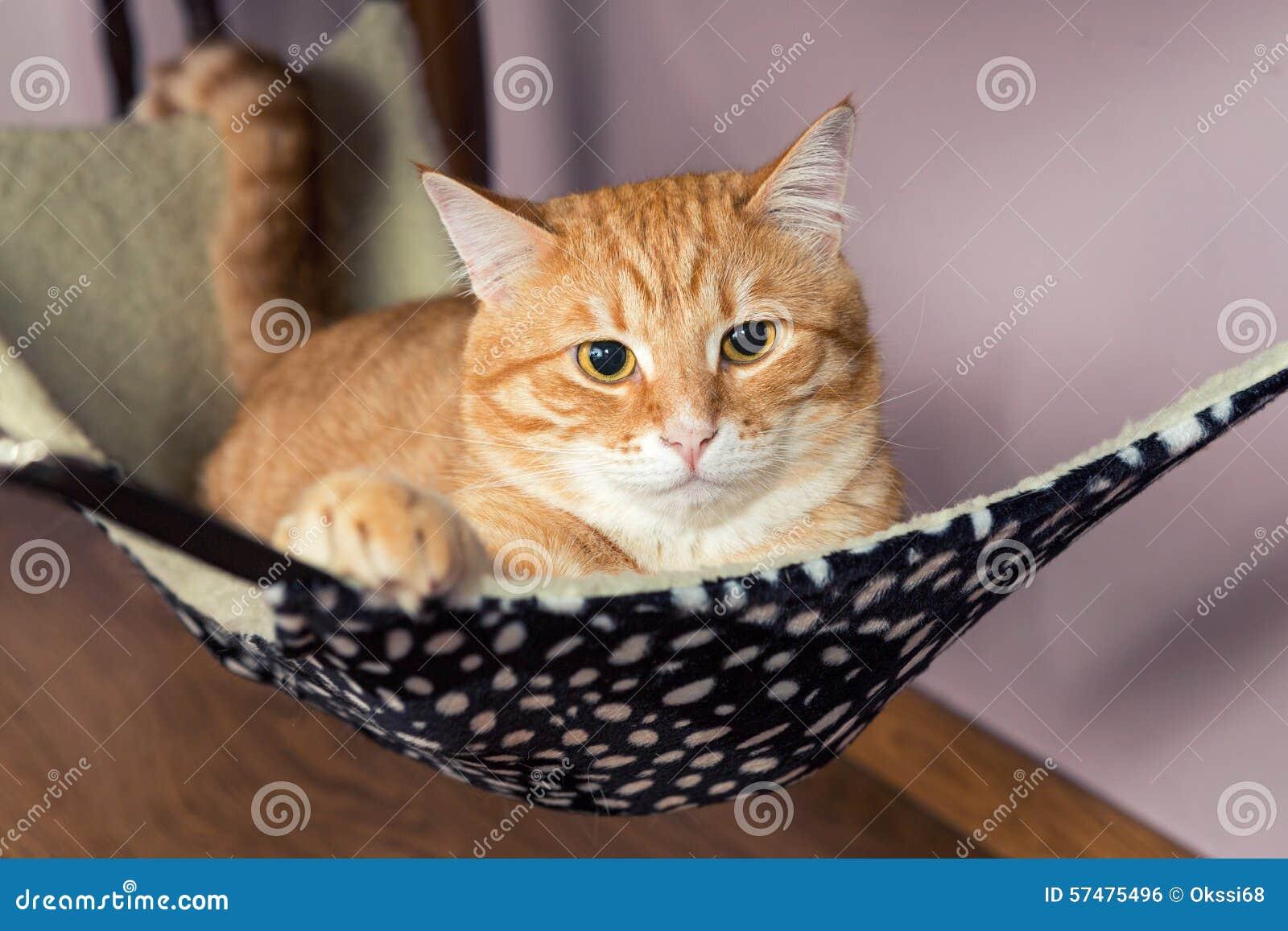 Kreskówki kota imbirowa szczęśliwa ilustracja