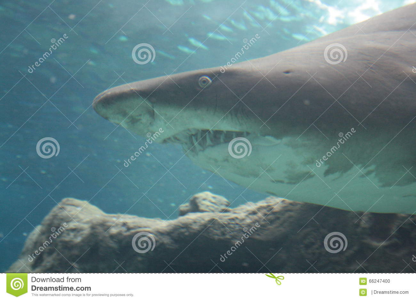 Kreta Oceanarium Haifisch