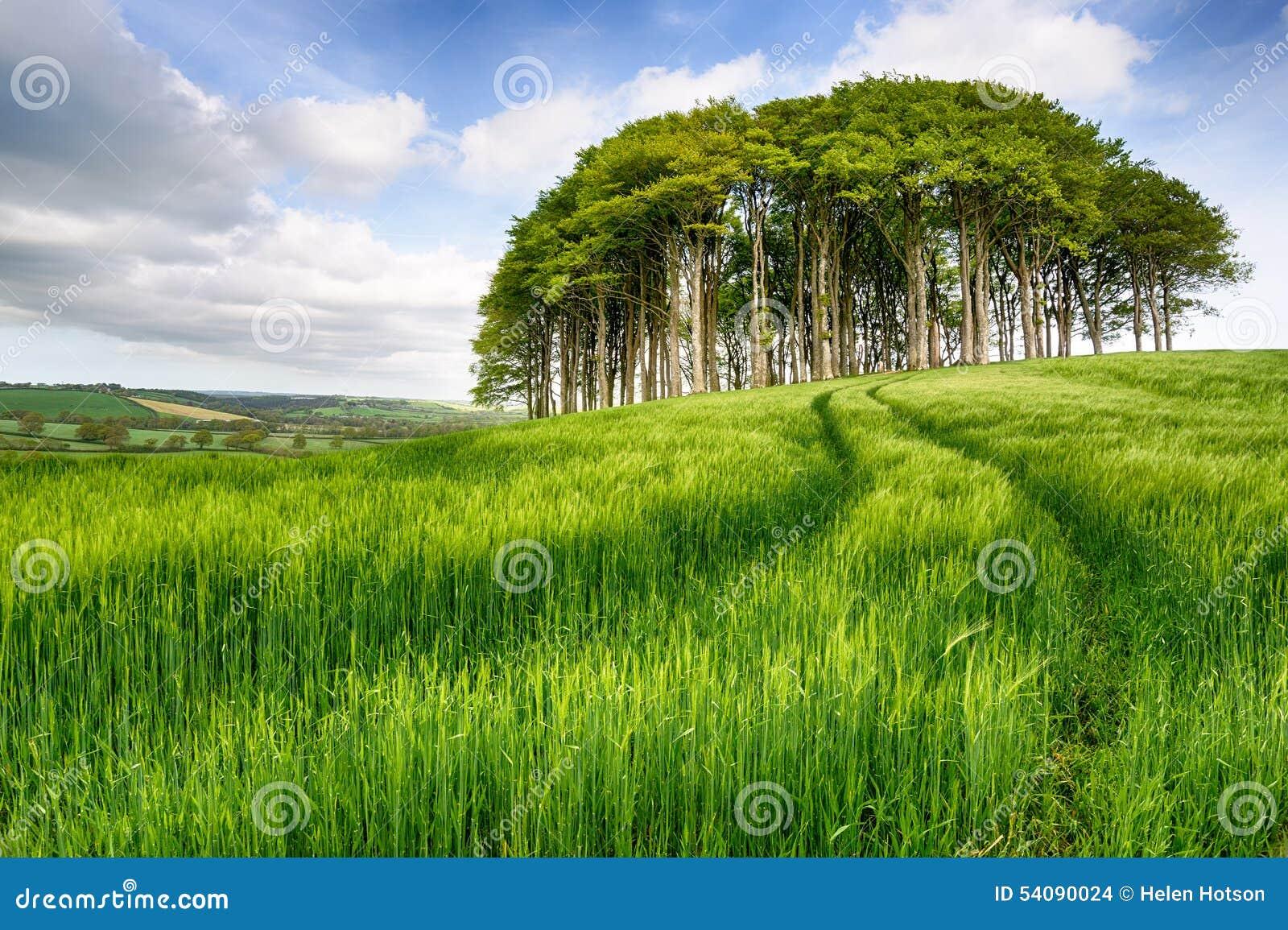 Kreupelbosje van Bomen op Gerstgebied