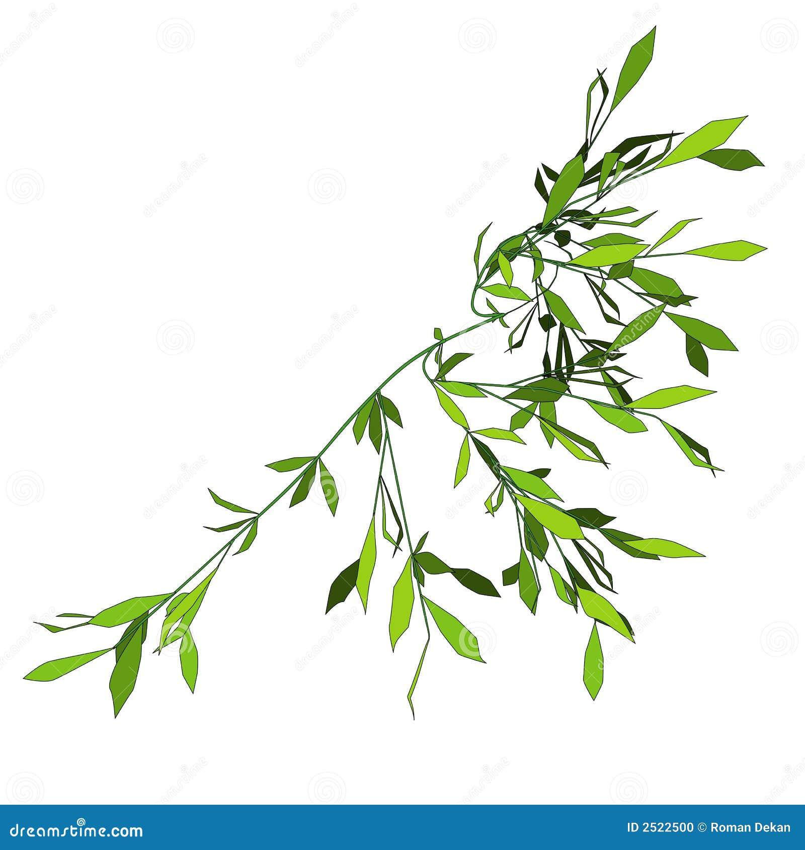 Kriechpflanze 2