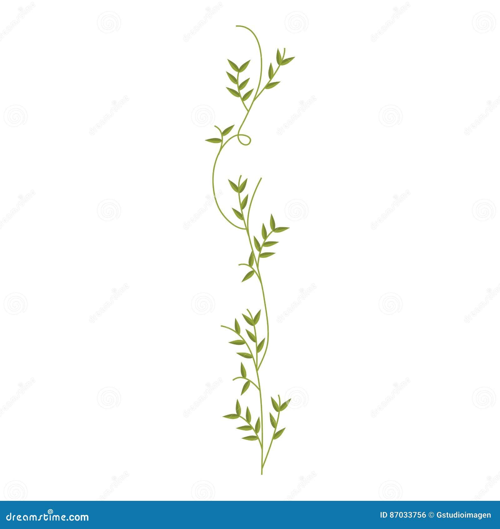 Kriechpflanze mit Blattnaturdesign