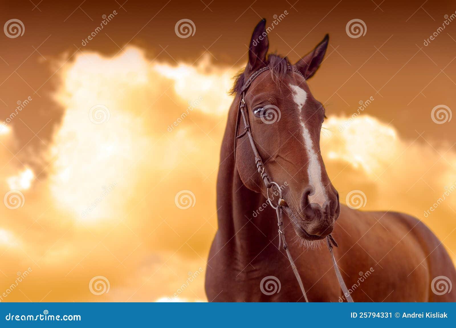 Krieg-Pferd