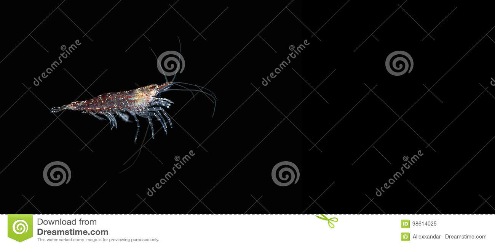 Krill Czerwona garnela krill