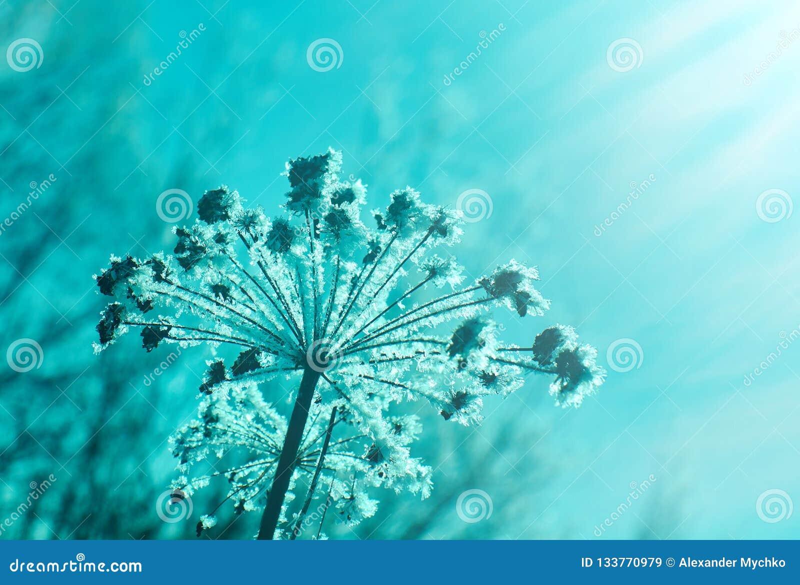 Kristal sneeuw-bloemen