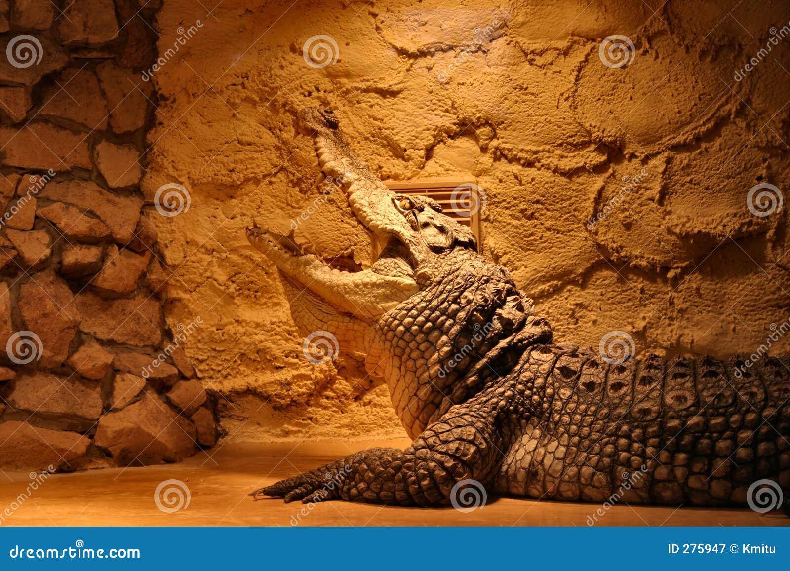 Krokodil in een terrarium