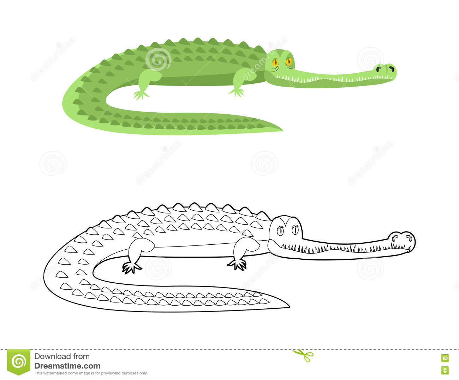 Krokodil-Malbuch Guter Kaiman Wildes Tier Grünes Reptil