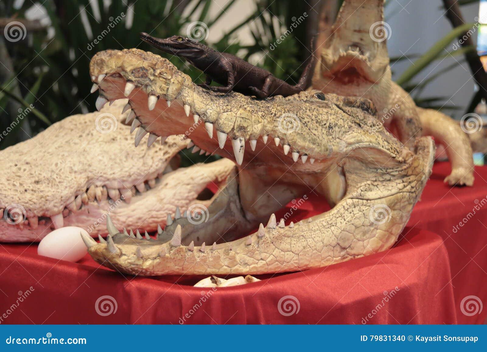 Großzügig Nil Krokodil Färbung Seite Bilder - Malvorlagen Von Tieren ...