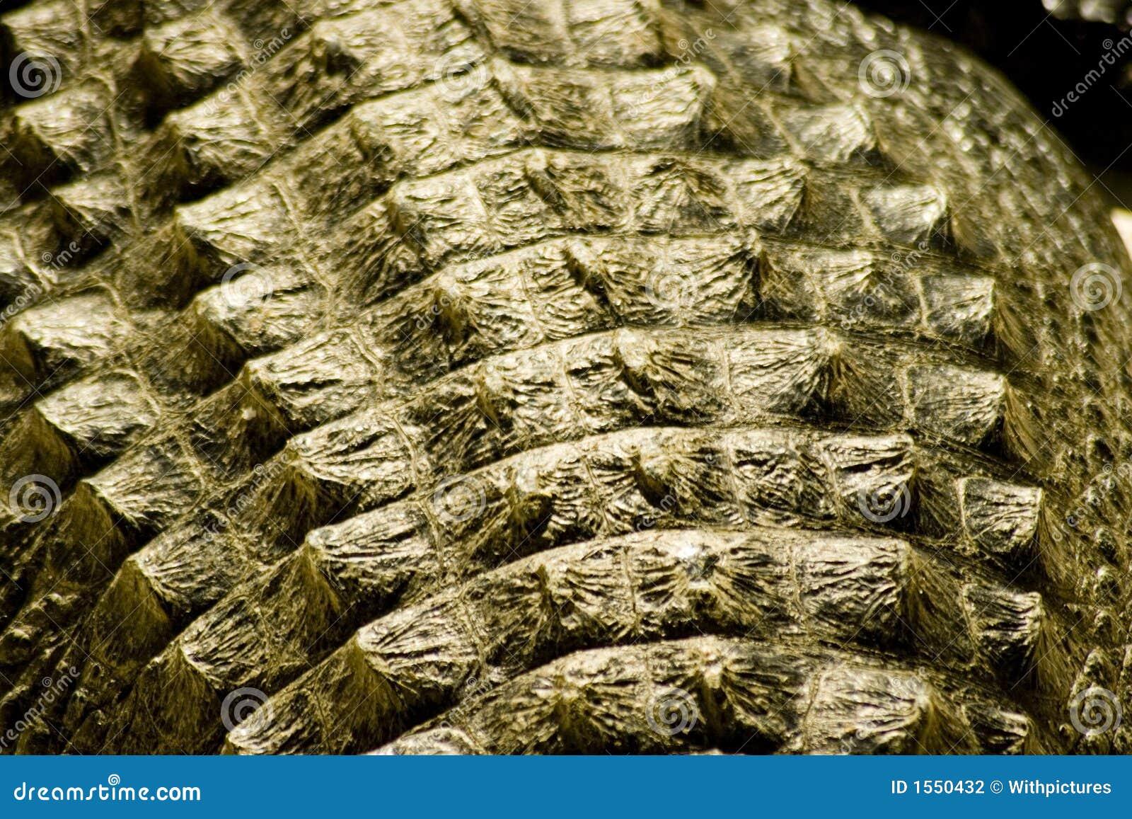 Krokodille huid