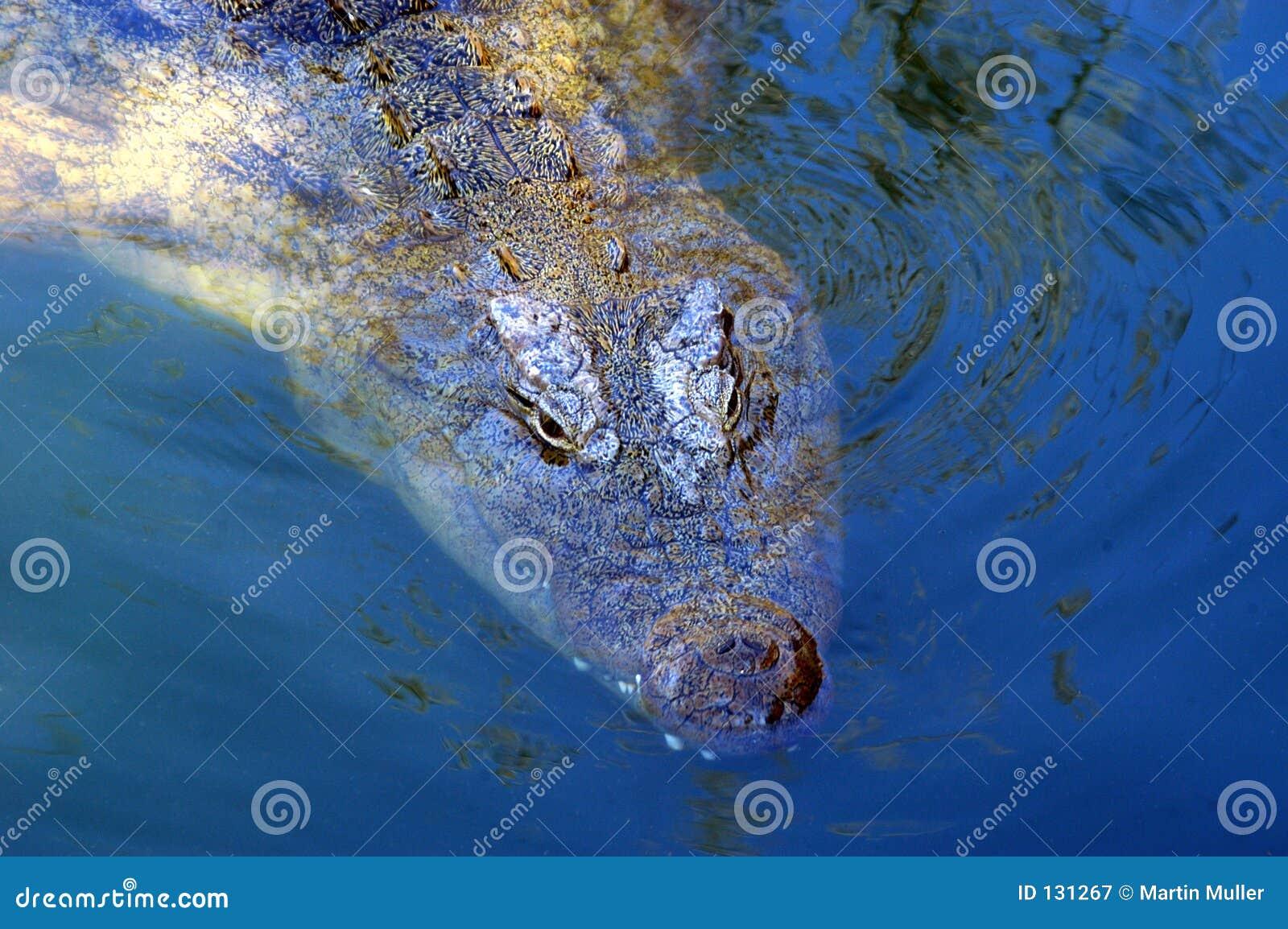 Krokodyl 01