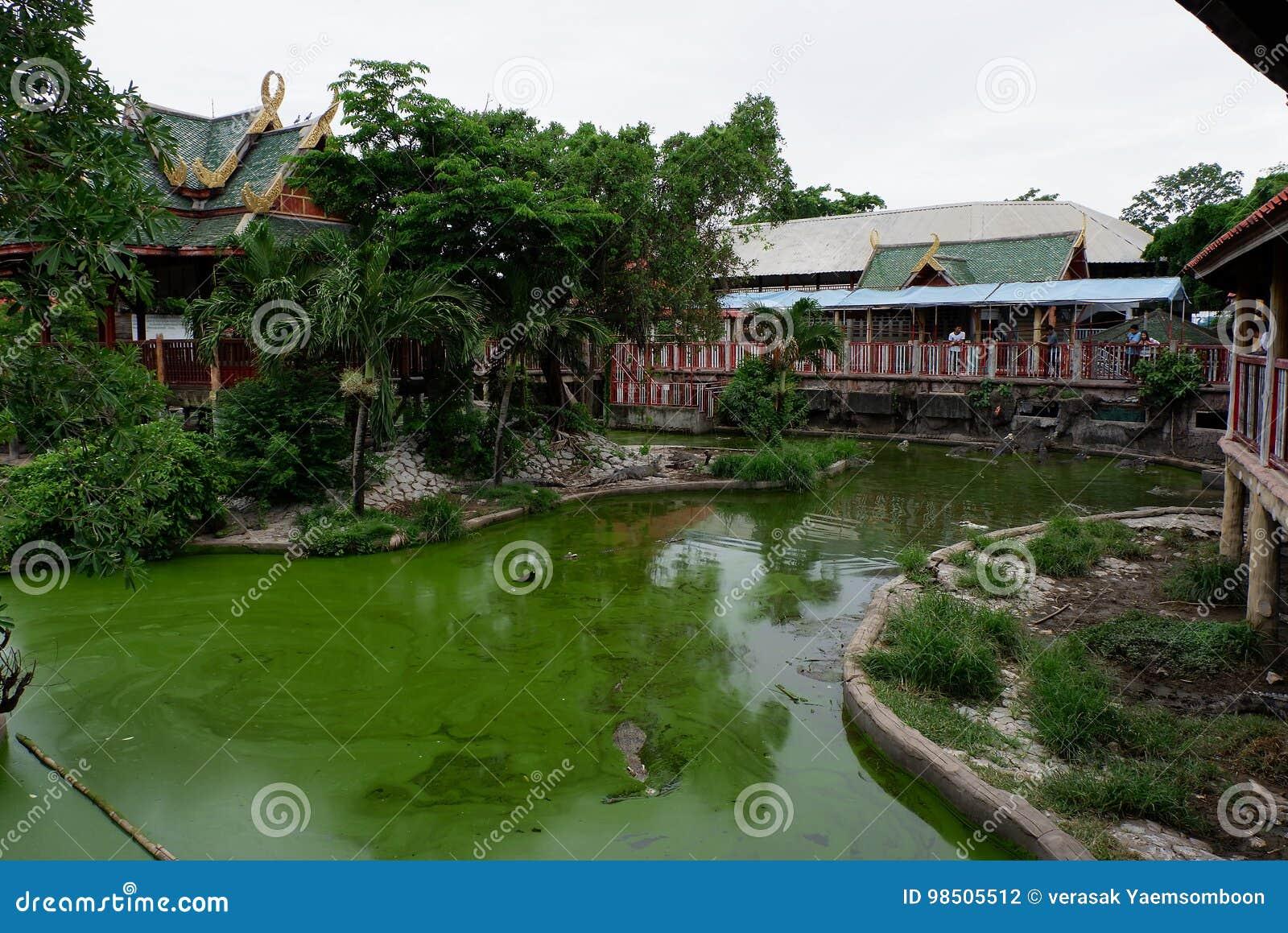 Krokodyla gospodarstwo rolne, Tajlandia