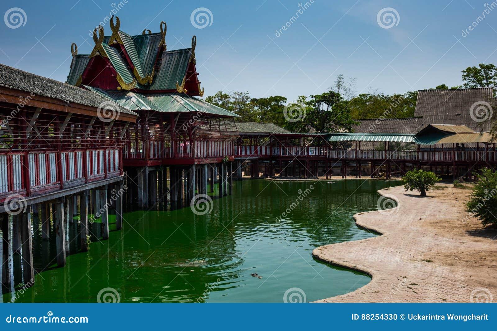 Krokodyla saltwater rolny krokodyl stawowy Samutprkarn Tajlandia - 2