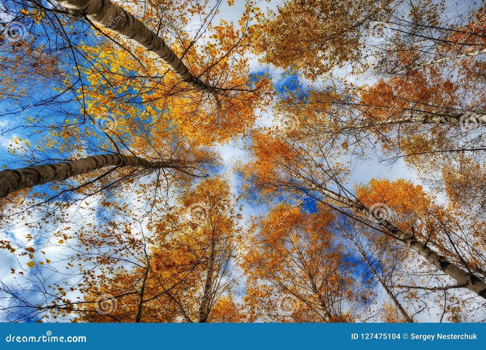 Kronen van de herfstbomen