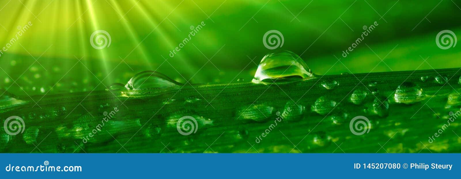 Kropelek trawy woda