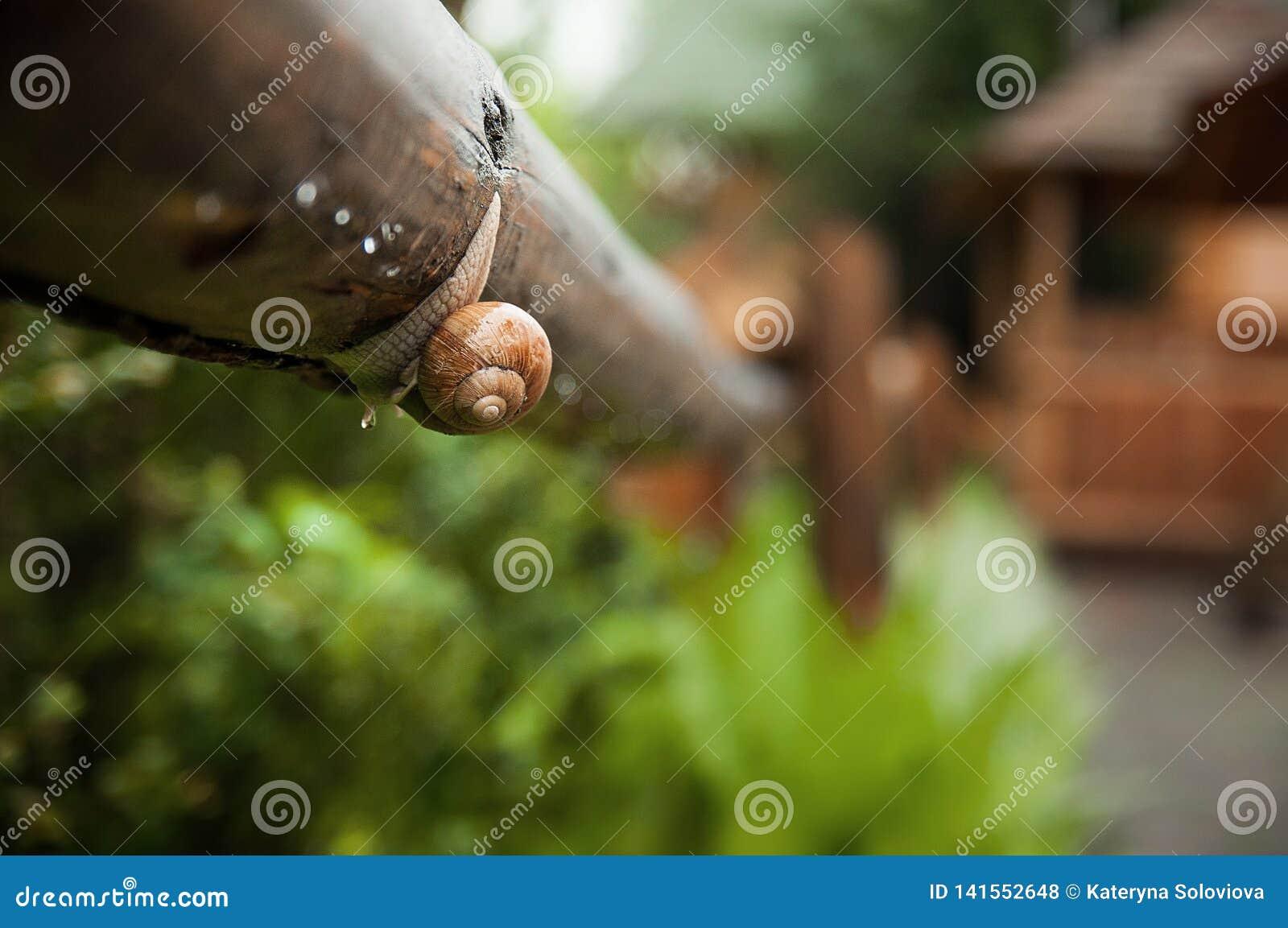 Kropelka i ślimaczek na liściu po deszczu