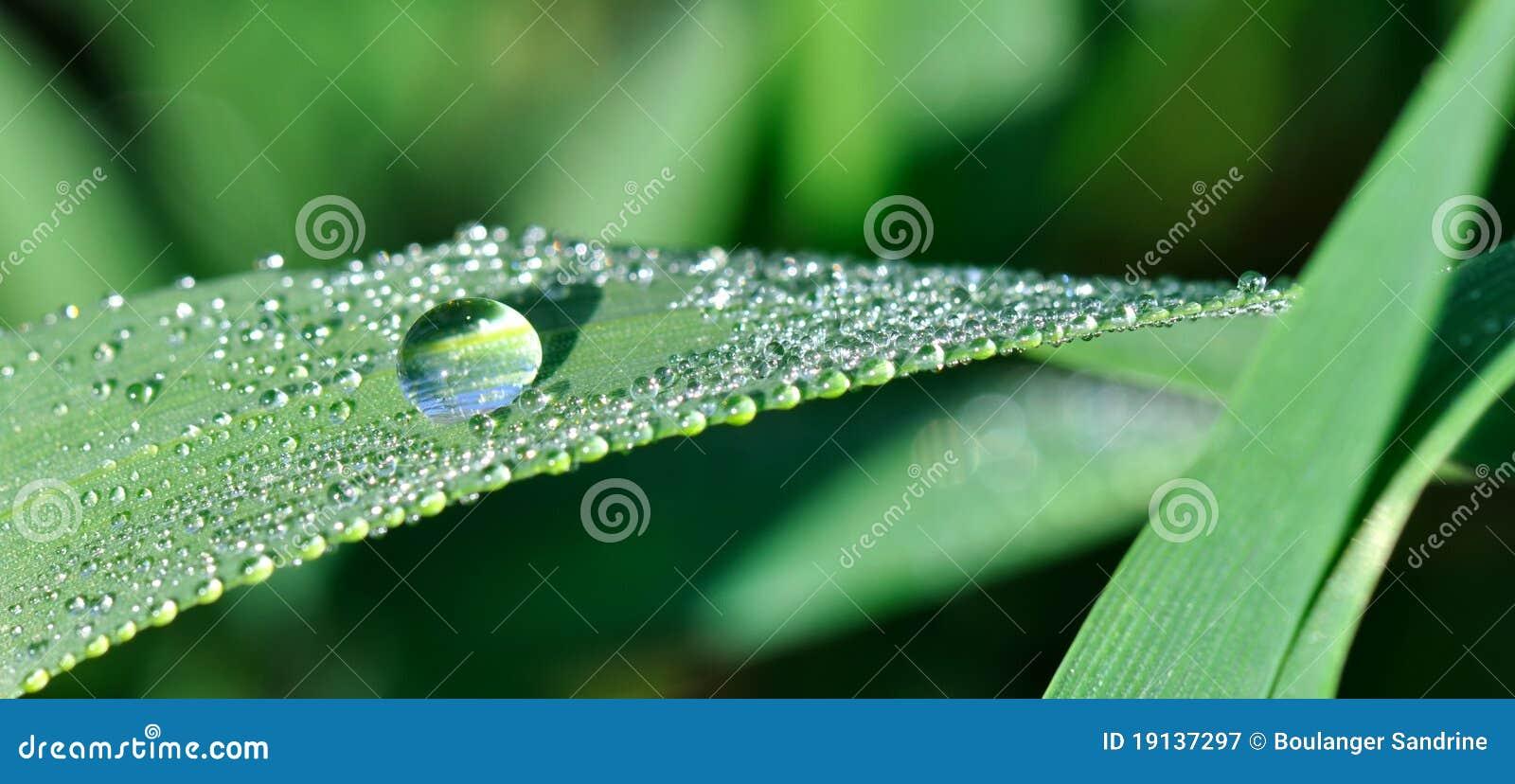 Kropla deszcz