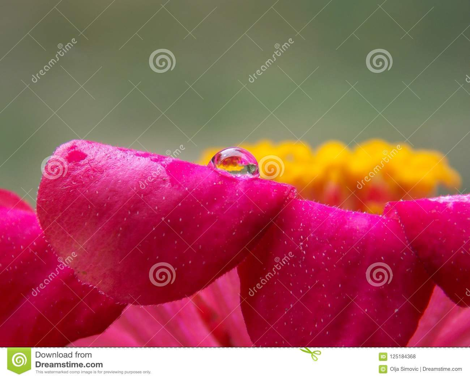 Kropla na kwiacie