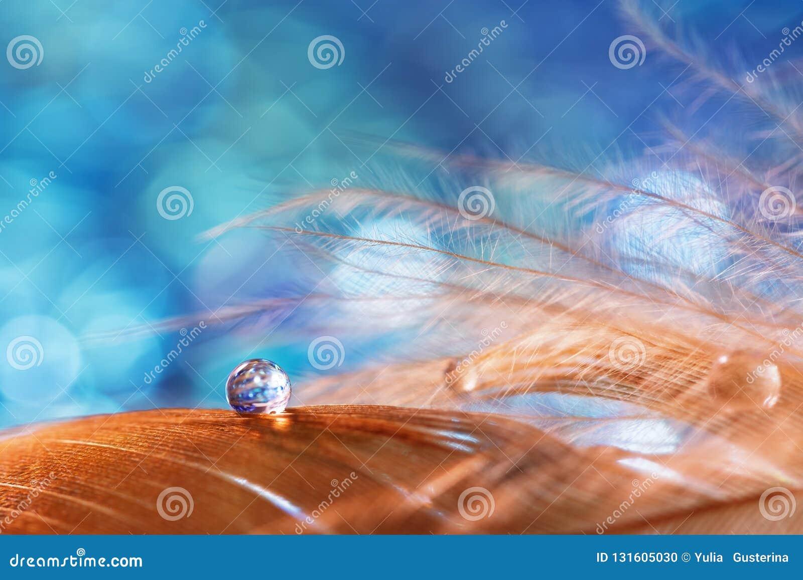 Kropla wodna rosa na puszystym piórku na w górę błękitnego zamazanego tła Abstrakcjonistyczny romantyczny magiczny artystyczny wi