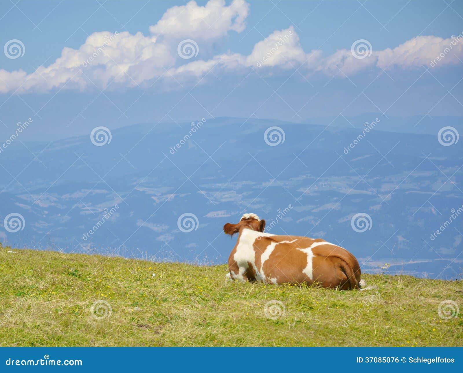 Download Krowa w natur alps zdjęcie stock. Obraz złożonej z krajobraz - 37085076