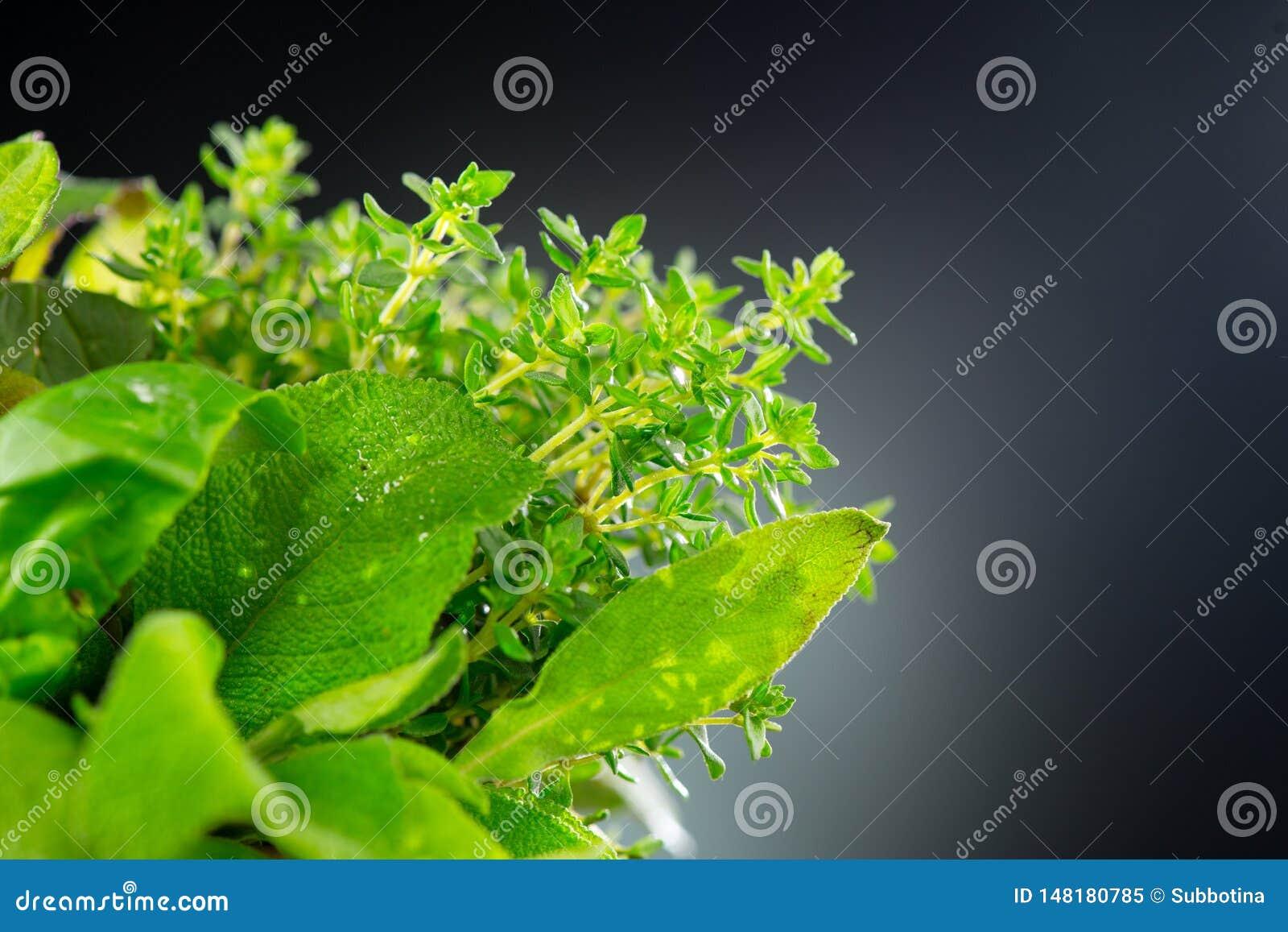 Kruiden Bos van verse groene organische aromatische kruidbladeren Munt, Pepermunt, Rosemary, Thyme, Salie