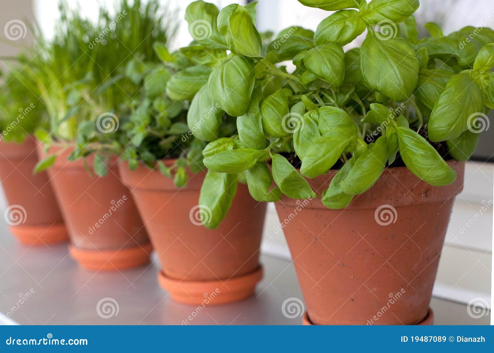 Different herbs royalty free stock image image 16265346 - Kruiden Die Op Vensterbank Groeien Royalty Vrije Stock Afbeeldingen