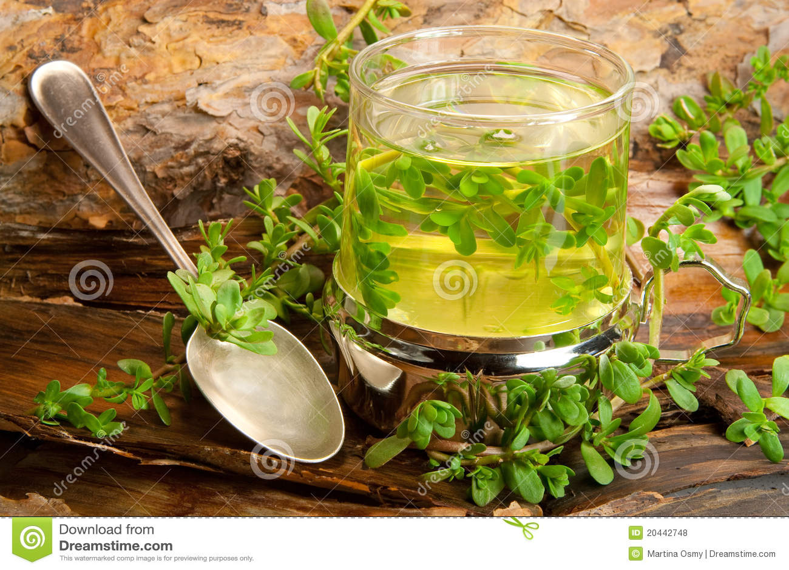 Health Benefits of Pennywort or Gotu Kola  CalorieBee