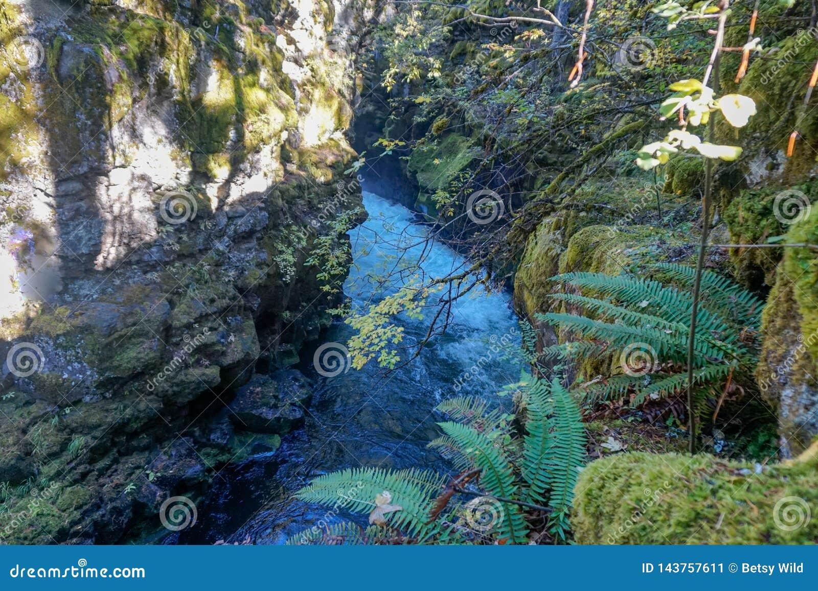 Kruipende rivier door een kloof