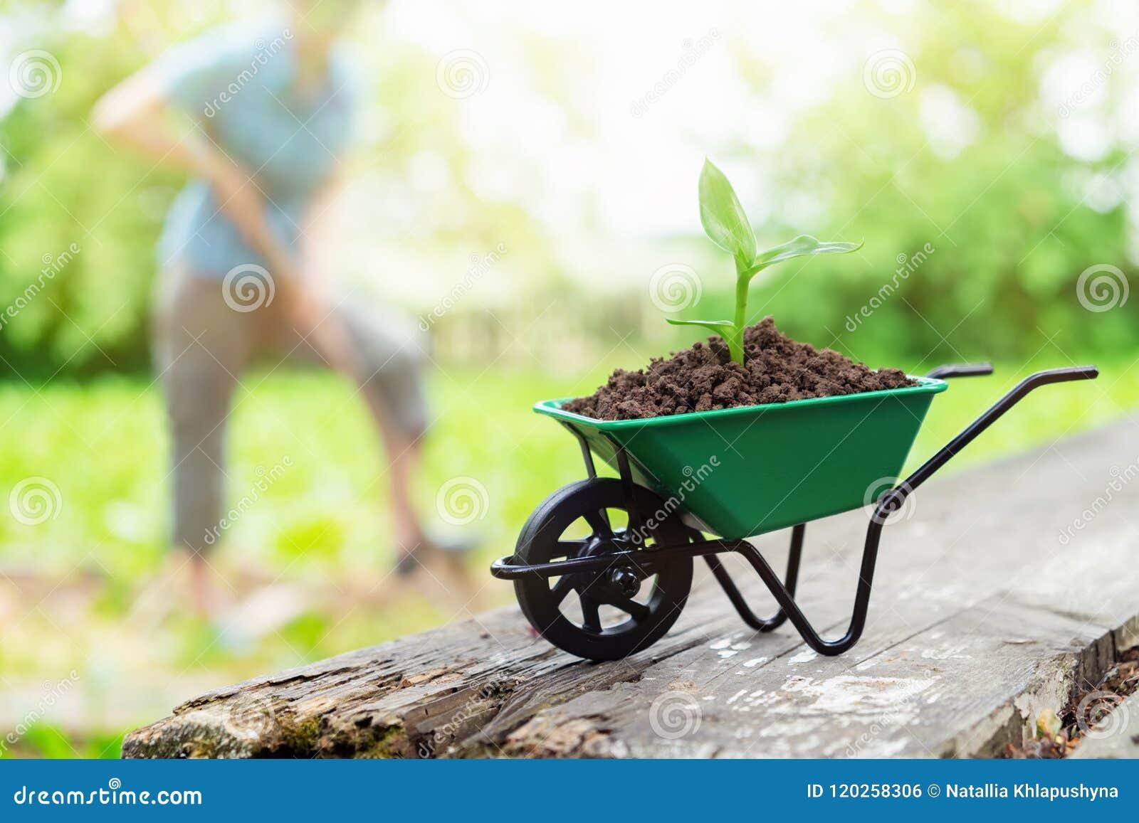 Kruiwagen met het kweken van zaailing Vrouw die in de tuin op achtergrond werken