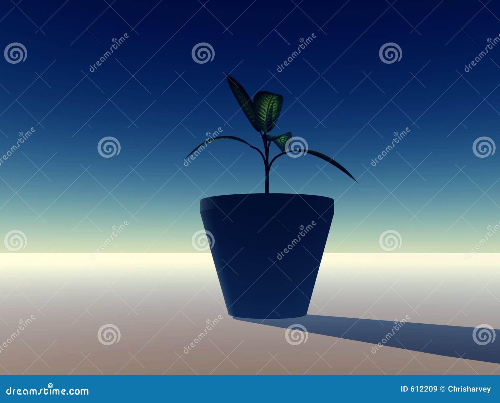 Krukväxt