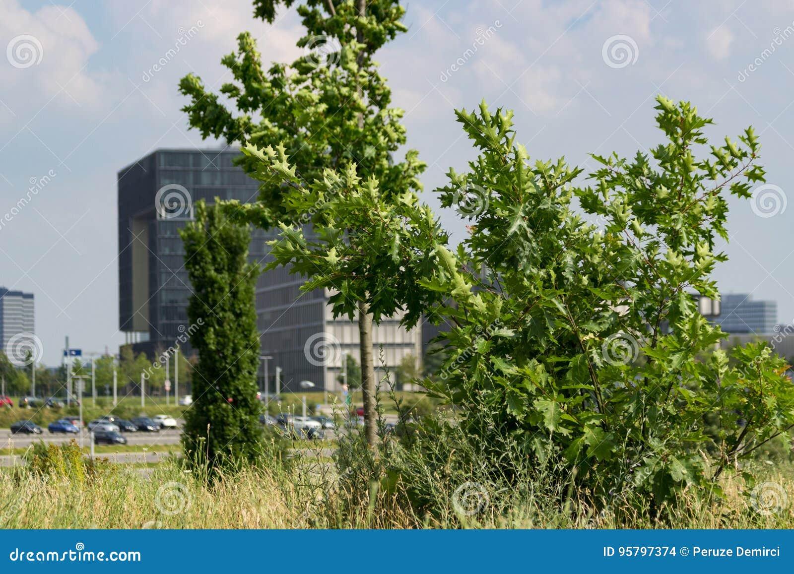 Krupp högkvarter med träd som är främsta av det