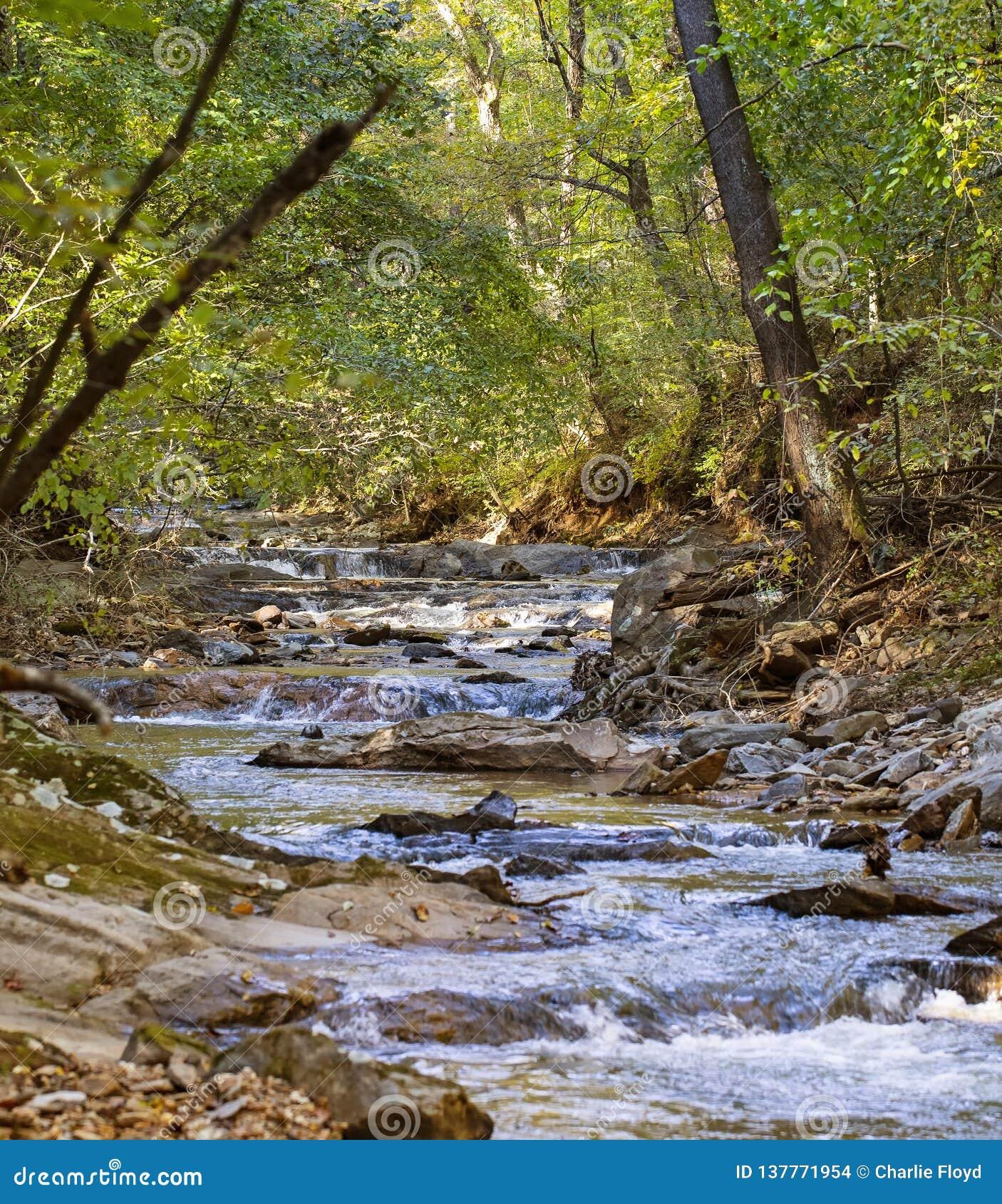 Krusningar för fiskfördämningliten vik till och med skogsmarker