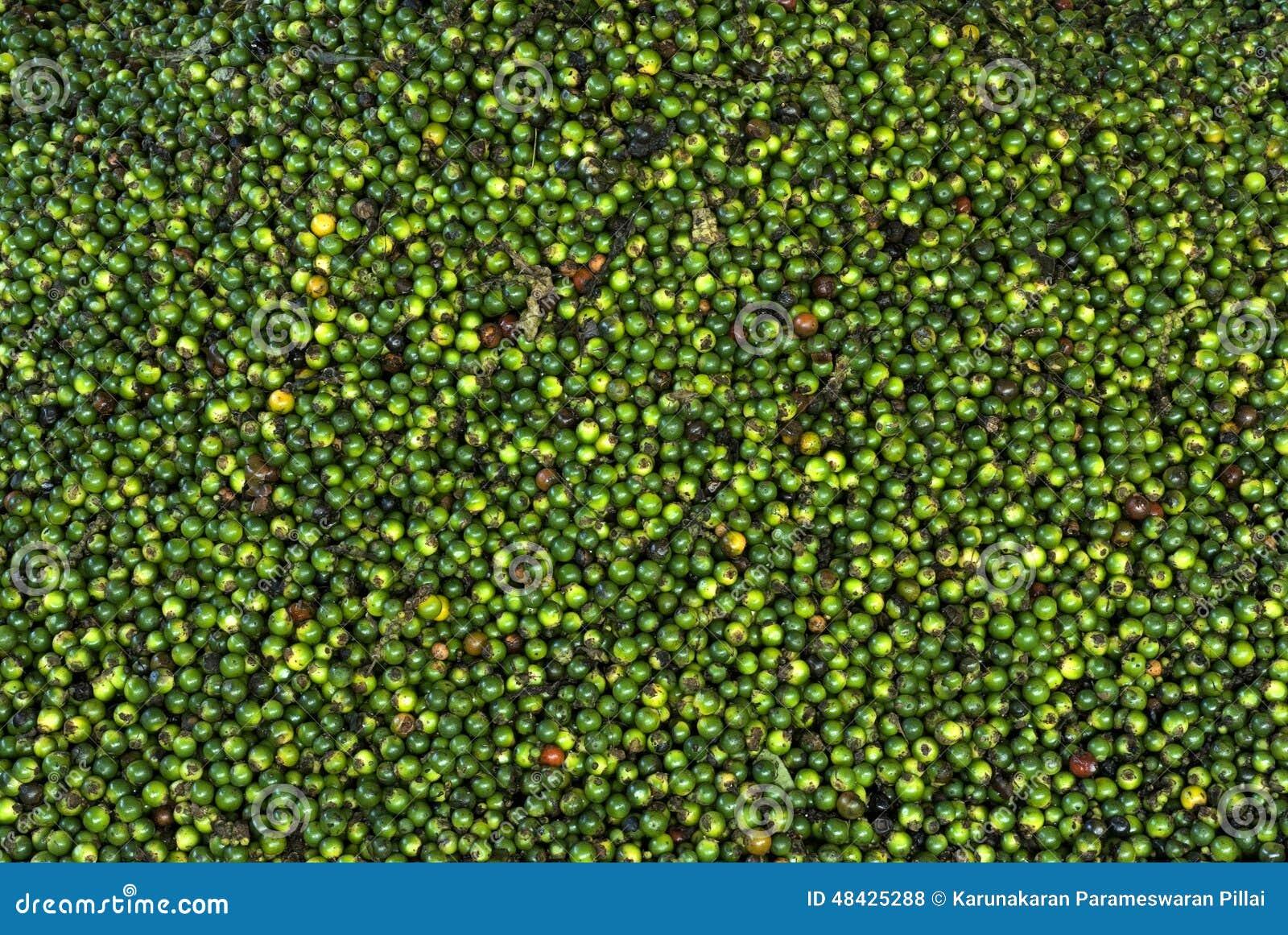 Krydda-Peppar-gräsplan pepparbär