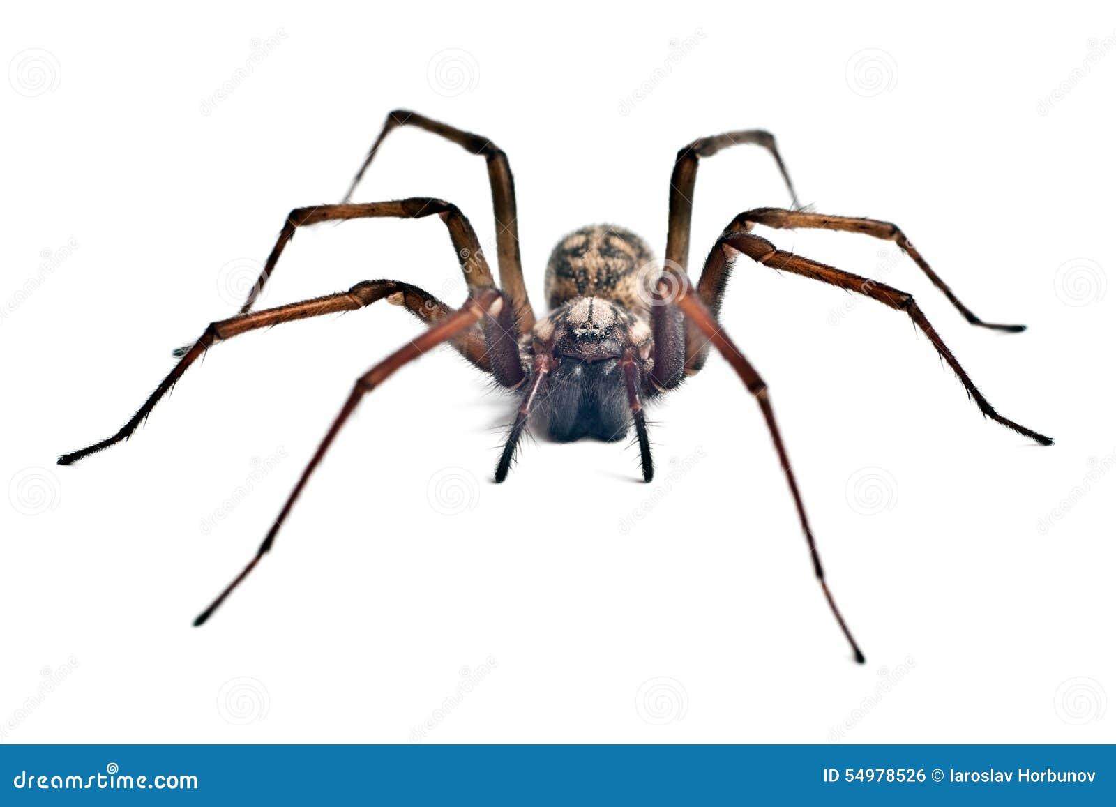 Krypa spindeln