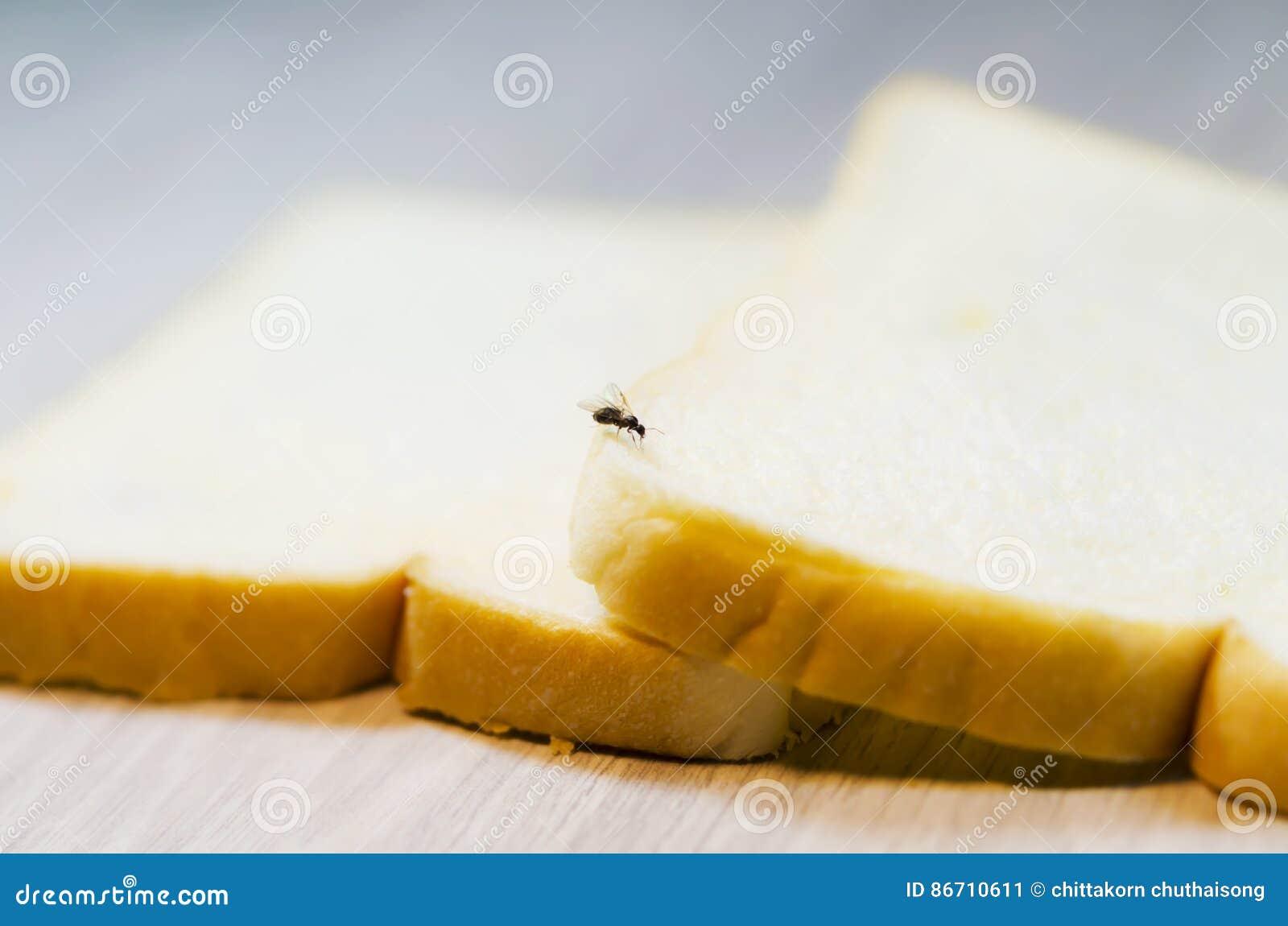 Krypet distraherar förarga på bröd