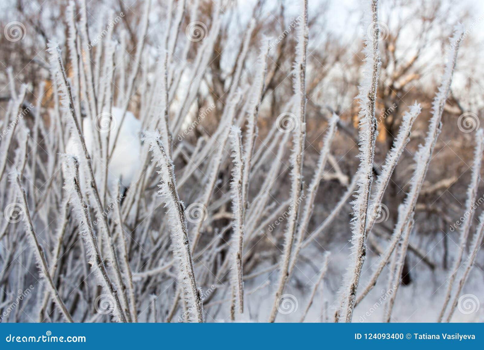 Krystalizujący czarodziejski drzewo Wintr tło